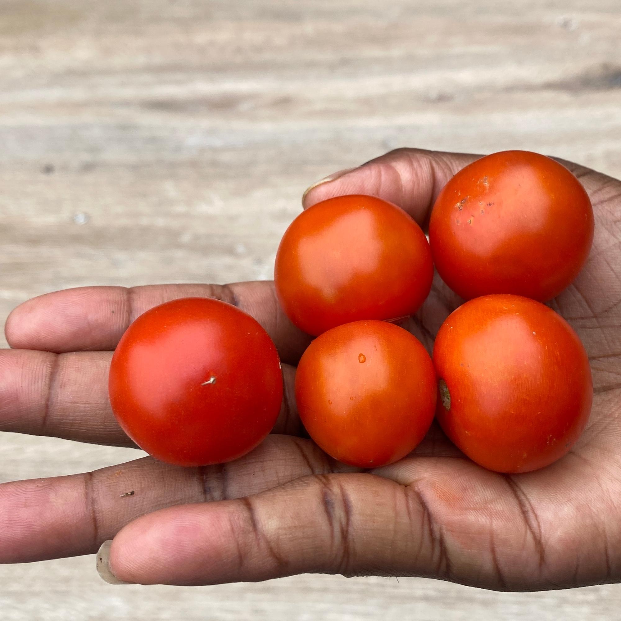 My cherry tomatoes