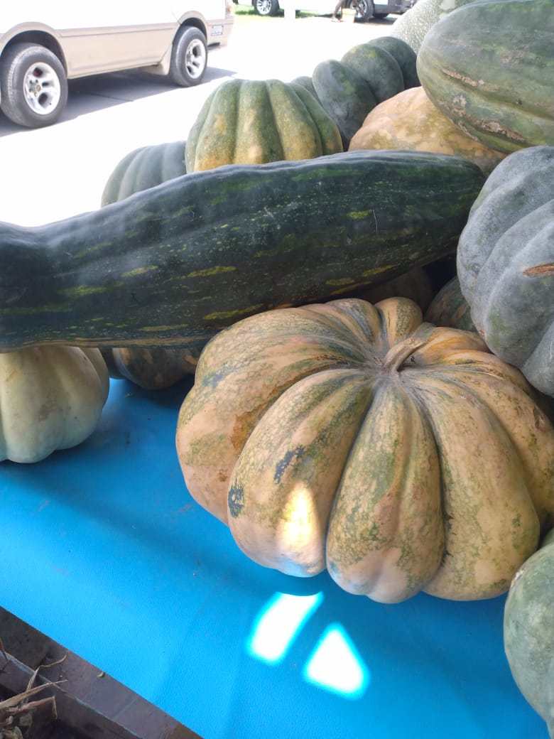 Guyanese Pumpkin: All Shapes and Sizes