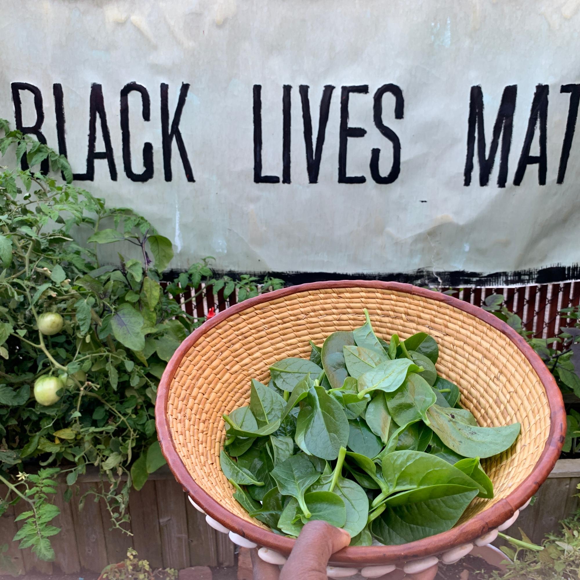 Backyard Spinach